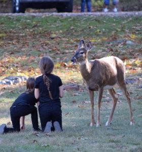 kids with deer