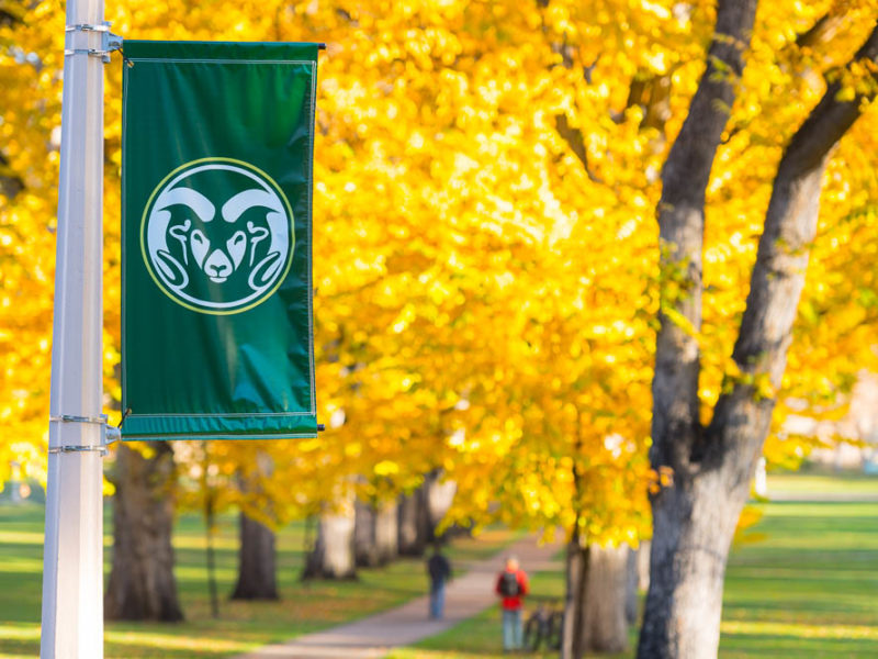 Flag with CSU logo against fall leaves