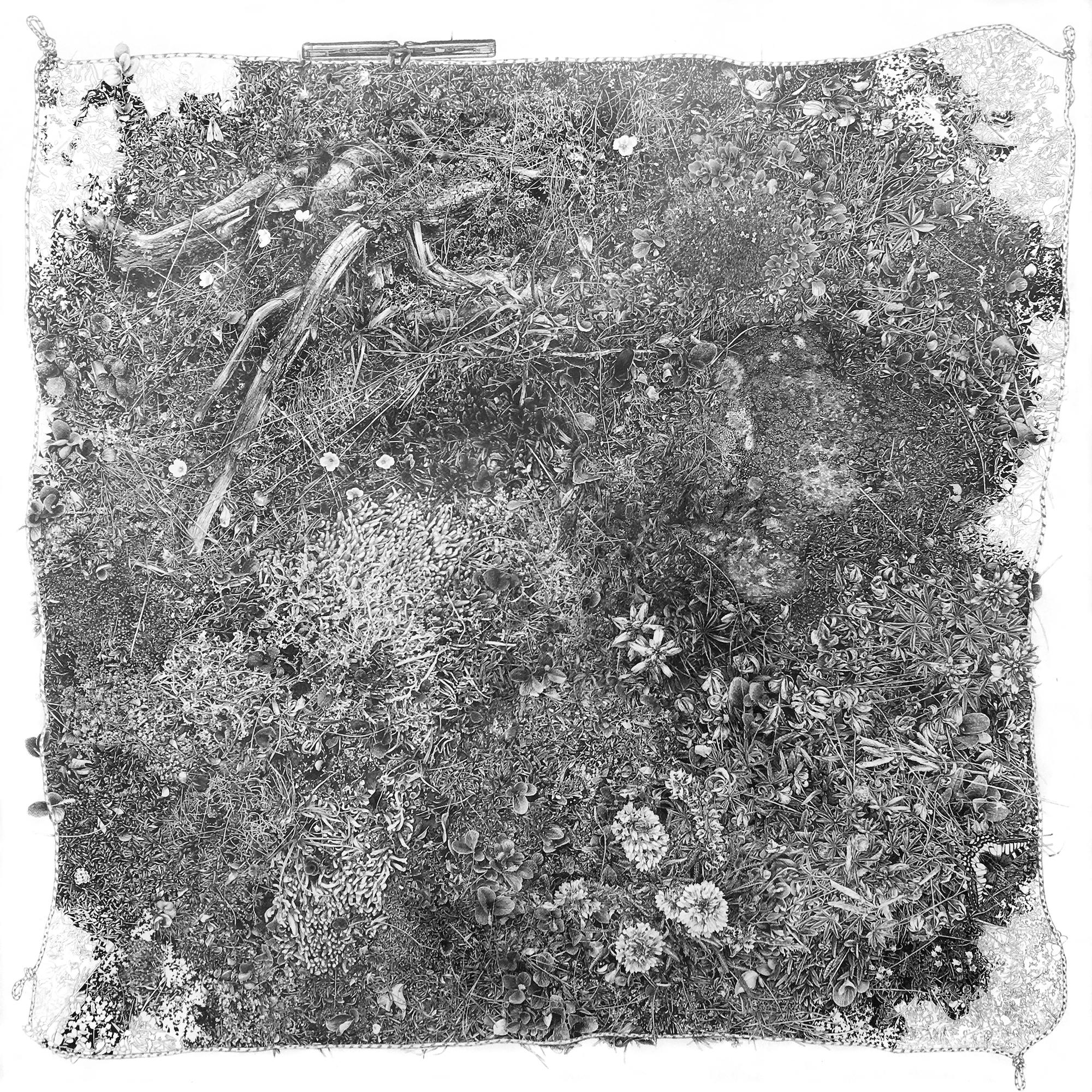Plot, by Cedra Wood